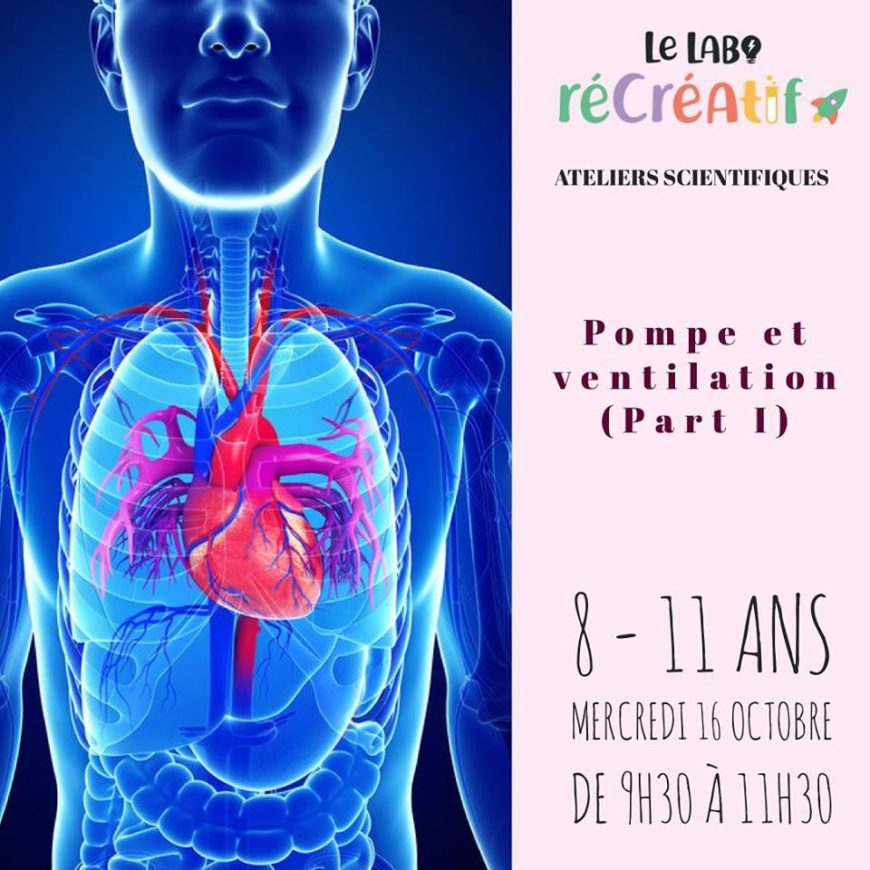 Le mercredi 16 Octobre : les poumons 8-11 ans.